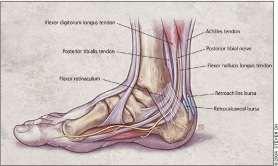 Foot Fig 2