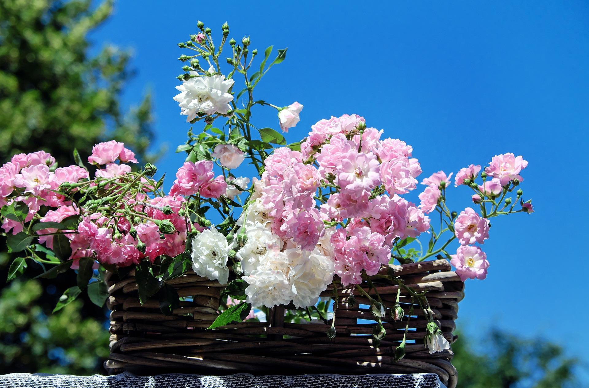 roses-1477992_1920