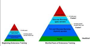 Endurance Fig 1