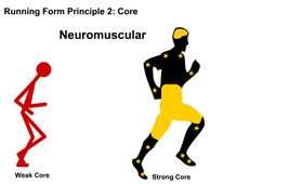 Neuromusecular